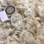 2017-422 lamb White snow